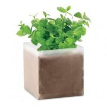 Mint Plantje